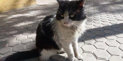 Kobe fue cambiado por un gatito más joven y de raza, ahora vive de nuevo en la calle