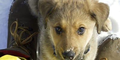 I 5 errori da non fare con il cane secondo l'addestratore