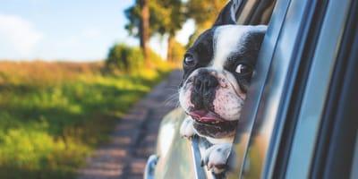 Deja abierto el coche: cuando regresa, alguien la mira fijamente desde el asiento de atrás