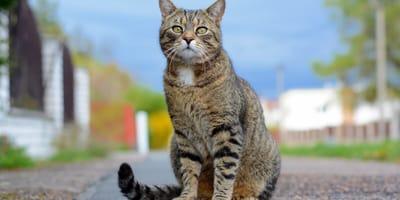 Koty giną w niewyjaśnionych okolicznościach. Kiedy policjanci docierają do sprawcy, nie wierzą w to, co widzą!