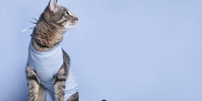 Ubranko dla kota po sterylizacji - wszystko, co warto o nim wiedzieć!