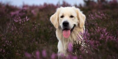 Alla scoperta delle razze di cani divertenti (Video)