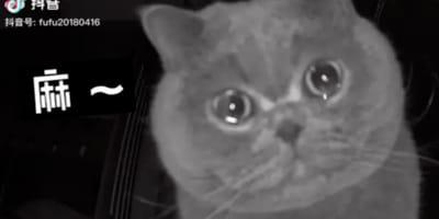La padrona va in vacanza, il gatto sente la sua voce e piange (Video)