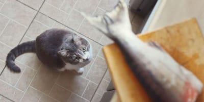 Si può dare la pelle del pesce al gatto? Rischi e benefici