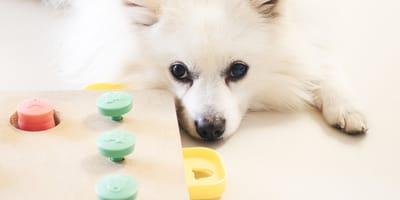 Il cervello del cane e il suo sistema limbico