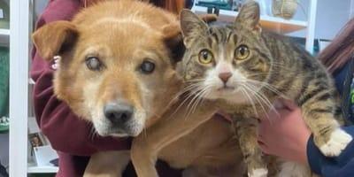 Perrito ciego y su gato guía por fin encuentran el hogar que necesitan