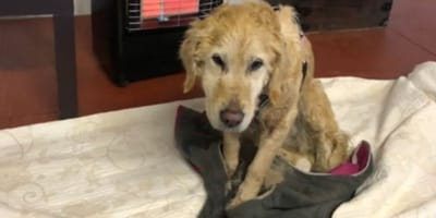 Couple save lost dog from freezing to death, but are now being reported to police