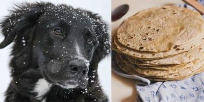 Unas tortillas recién compradas salvaron a este perrito de morir congelado