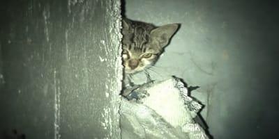 Neben der Leiche sitzt ein Kätzchen: Als sie die Situation begreifen, kämpfen sie mit den Tränen!