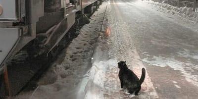 Este gato va a la estación todos los días a las 22:40 por el motivo más dulce