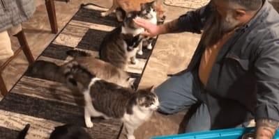 Es increíble ver a estos 7 gatos adiestrados a la hora de la comida (Vídeo)