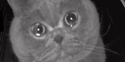 Sie will nur ein Kätzchen beobachten: Was die Kamera dann filmt, geht um die Welt!