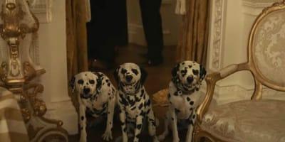 Crudelia torna al cinema: la PETA lancia un'allerta sui Dalmata