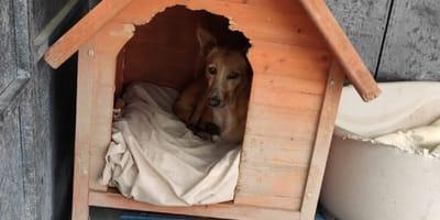 perro al fondo de una caseta