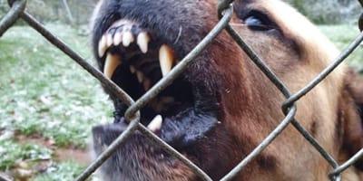 """""""Wir alle können nicht mehr!"""" Aufschrei von Tierheim geht viral auf Facebook"""