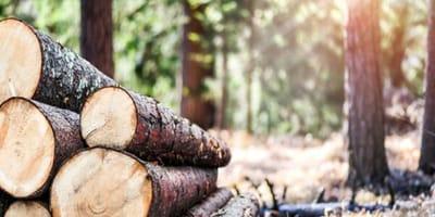 Mujer que escucha llantos en el bosque hace un descubrimiento espeluznante
