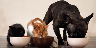 Por qué no debes darle las sobras de comida a tu mascota