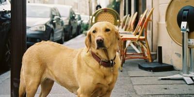 ¡No saques a tu perro sin correa! Podrías acabar haciendo trabajo comunitario