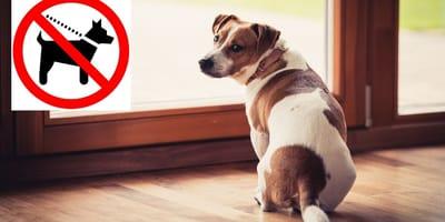 Excusas para no sacar al perro a la calle: el educador canino contesta