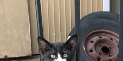 Gato callejero tiene una mancha en la cara que se parece a... ¡otro gato!