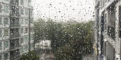 Escucha golpes desesperados en su ventana: lo que descubre la deja de piedra