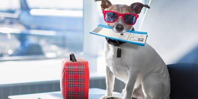 ¿Qué se necesita para pasar un perro a Estados Unidos? Los requisitos para que tu peludo cruce la frontera