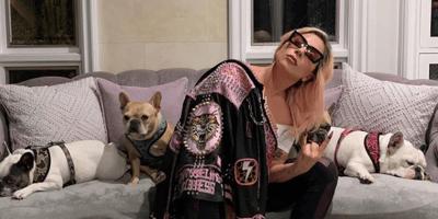 Sparatoria per rubare i Bulldog francesi di Lady Gaga