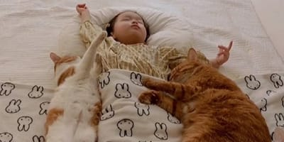 Cinco gatos suben a la cama de la bebé: afortunadamente había alguien grabando