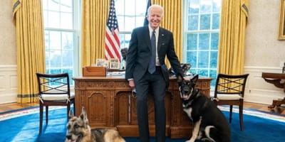 President Biden with dogs in the Oval Office