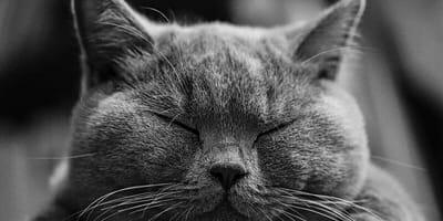 Cure e sintomi dell'atassia cerebellare del gatto