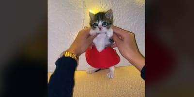 Gato bebé bailando con falda en TikTok se hace viral por una razón adorable