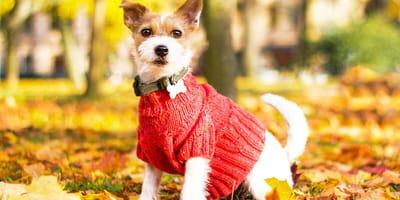 Cómo hacer un suéter para perro: los mejores tutoriales