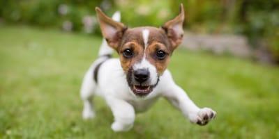 Marzec – na co powinni zwrócić uwagę opiekunowie psów w tym miesiącu?