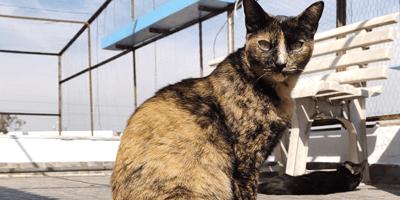 Esta gatita lleva años buscando casa y nadie la quiere por esta ridícula razón