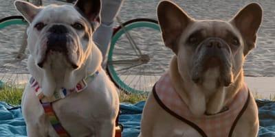 I cani di Lady Gaga sono salvi: ecco dove sono stati ritrovati