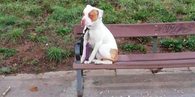 perro mestizo abandonado banco parque asturias