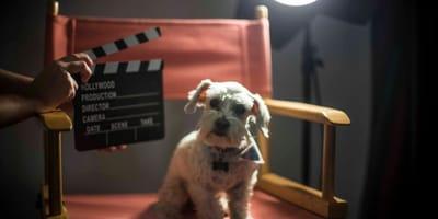 Cani famosi del cinema: i film con protagonista Fido!