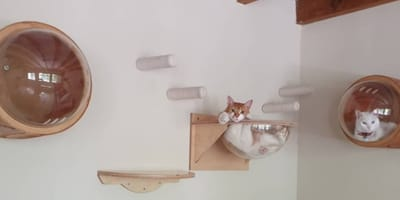 Gatos disfrutando de su estadía en un hotel felino