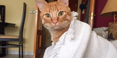 Madrid: Este gato enamora a todos pero nadie lo adopta porque tiene ''tara''