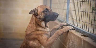 perro mestizo jaula protectora malaga