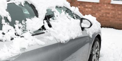 Perra da a luz durante una tormenta: se quedan 12 horas en un coche para mantener calientes a los pequeños