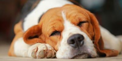 Darf man schlafende Hunde wecken?