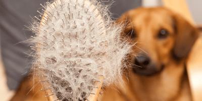 Cepillos para peinar perros de pelo largo: qué tipos hay y cuál elegir