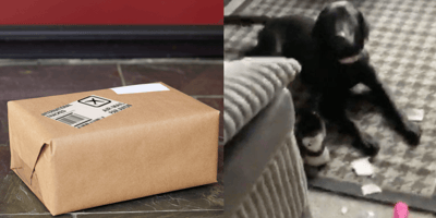 Dog opens neighbours' package, owners embarrassed once they see its contents