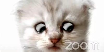 Un fiscal activa el divertido filtro de gato en Zoom