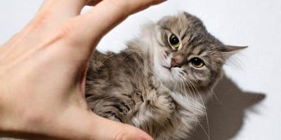 El violento desalojo de un gato que indigna a los chilenos