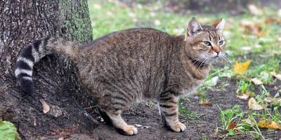 Czy można oduczyć kota znaczenia terenu?