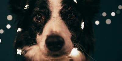 Oroscopo del mese di marzo: cani e stelle