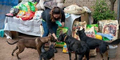 Aiutateci a salvare 100 gatti: l'appello del canile di Bari