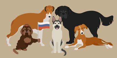 Rosyjskie rasy psów - od owczarka kaukaskiego po rosyjskiego toy